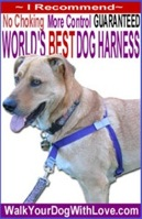 walk your dog with love dog harness